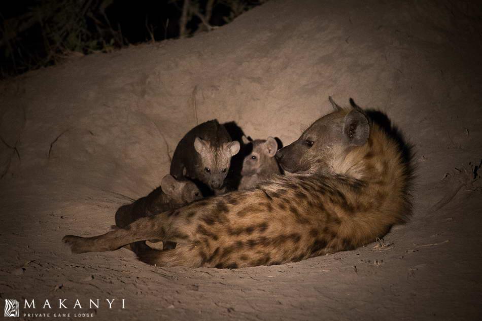 An active hyena den